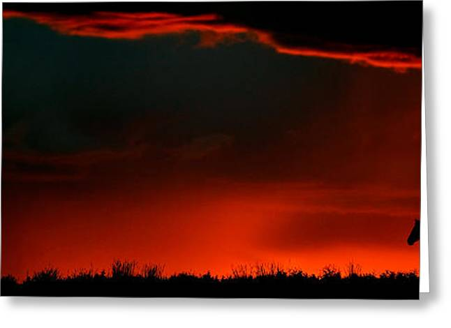 Nature Scene Greeting Cards - Panoramic Horse Sunset Greeting Card by Mark Duffy