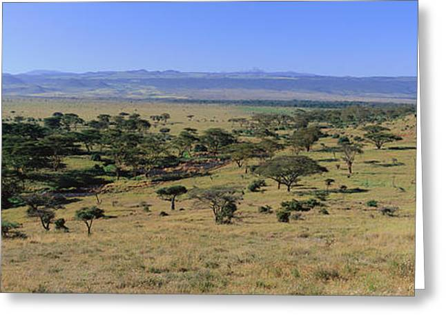 Panoramic Landscape Of Lewa Greeting Card by Panoramic Images