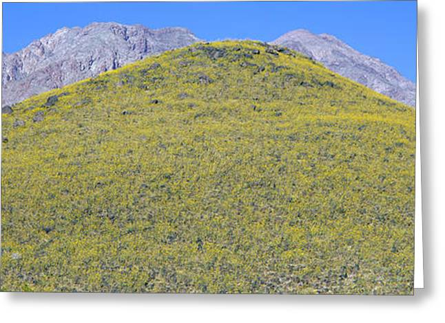 Rural Landscapes Greeting Cards - Panoramic View Of Desert Gold Yellow Greeting Card by Panoramic Images