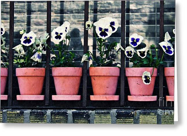 Sarah Loft Greeting Cards - Pansies on the Window Ledge Greeting Card by Sarah Loft
