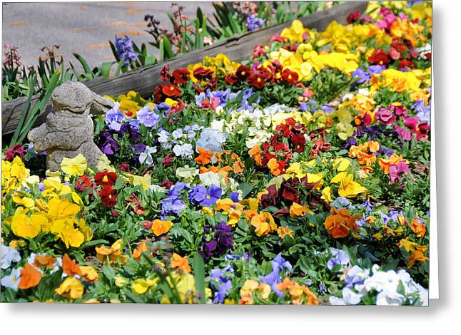 Best Sellers -  - Garden Statuary Greeting Cards - Pansy Paradise Greeting Card by Jan Amiss Photography