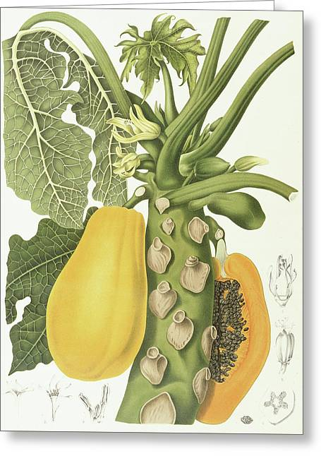Papaya Greeting Card by Berthe Hoola van Nooten