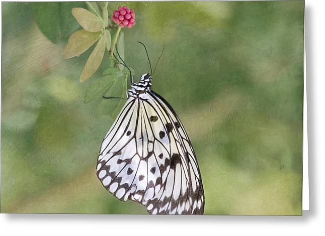Rice Paper Greeting Cards - Paper Kite Greeting Card by Kim Hojnacki