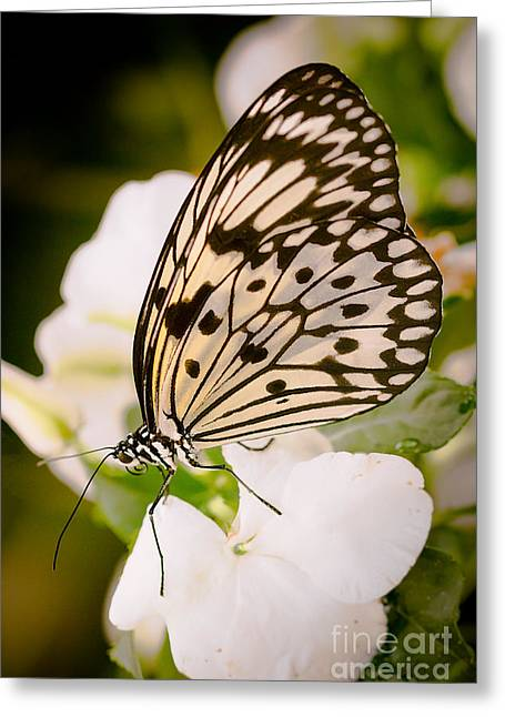 Greeting Cards - Paper Kite on White Greeting Card by Ana V  Ramirez