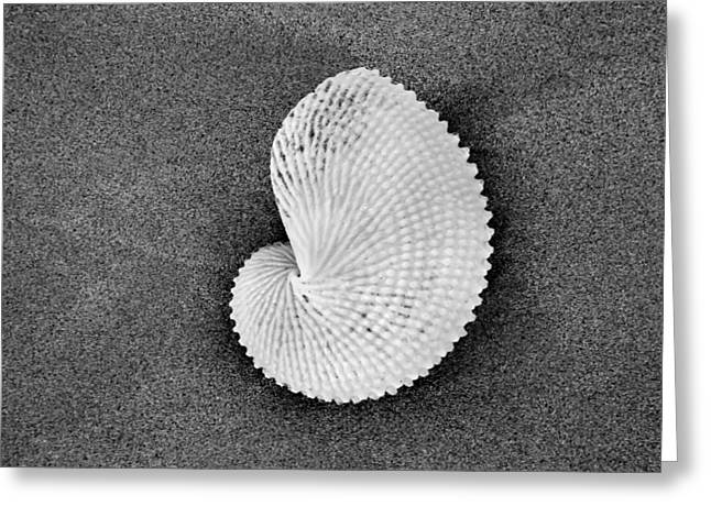 Seaside Art Greeting Cards - Paper Nautilus Shell Greeting Card by Sean Davey
