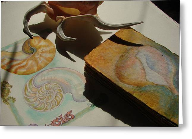 Nautical Pastels Greeting Cards - Papery Rapa Shell Greeting Card by Phyllis OShields