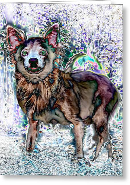Toy Dogs Digital Art Greeting Cards - Papillon Greeting Card by Warren Sarle
