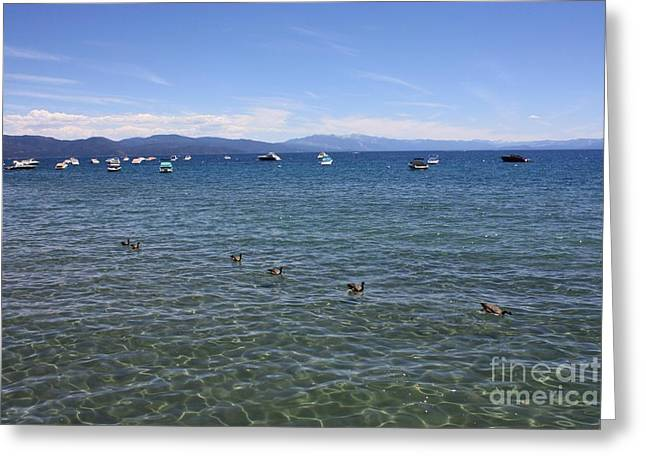 Boats On Water Greeting Cards - Parade of Geese Greeting Card by Carol Groenen