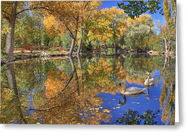Swans... Greeting Cards - Paradise Greeting Card by Donna Kennedy