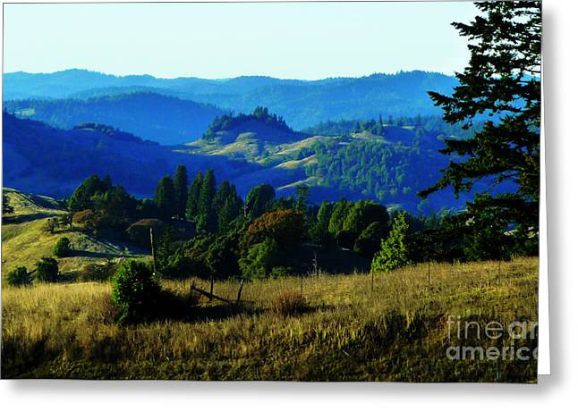 Fir Trees Greeting Cards - Paradise Greeting Card by JoAnn SkyWatcher