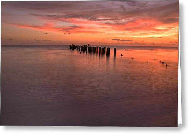 South West Florida Greeting Cards - Paradise Greeting Card by Kim Hojnacki