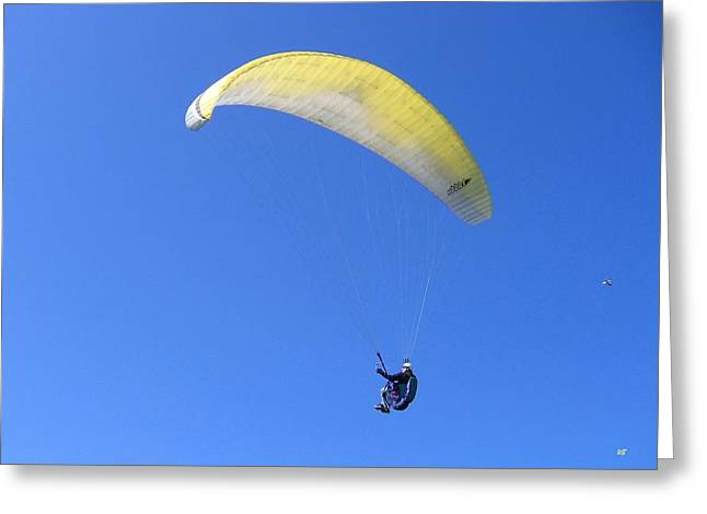 Paraglider And Seagull Greeting Card by Will Borden