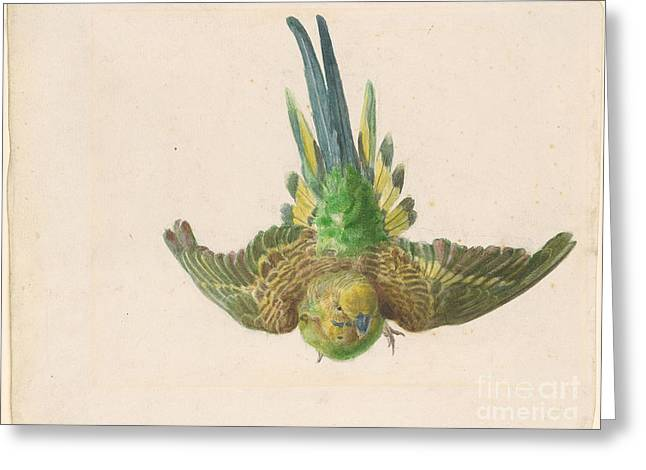 Parakeet In Flight Greeting Card by Edward Lear