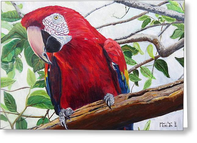Reserve Greeting Cards - Parrot Portrait Greeting Card by Marilyn  McNish