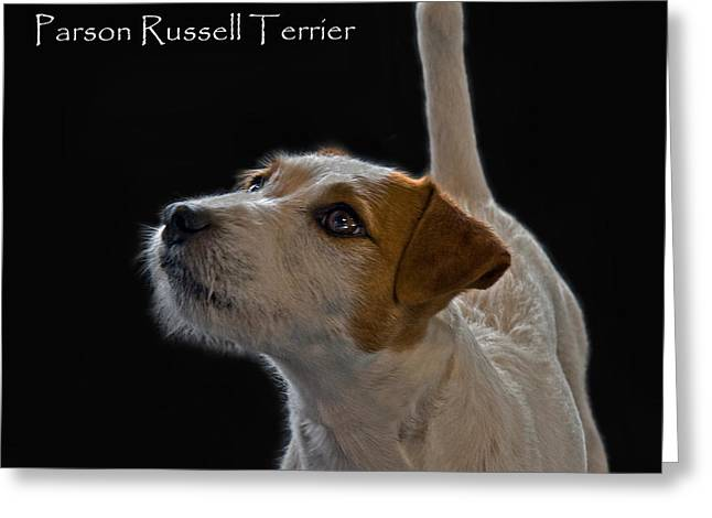 Parson Russell Terrier Greeting Card by Larry Linton