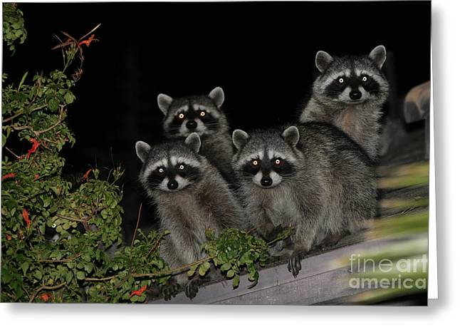 Nina Prommer Greeting Cards - Party of Five on the Roof Top Greeting Card by Nina Prommer