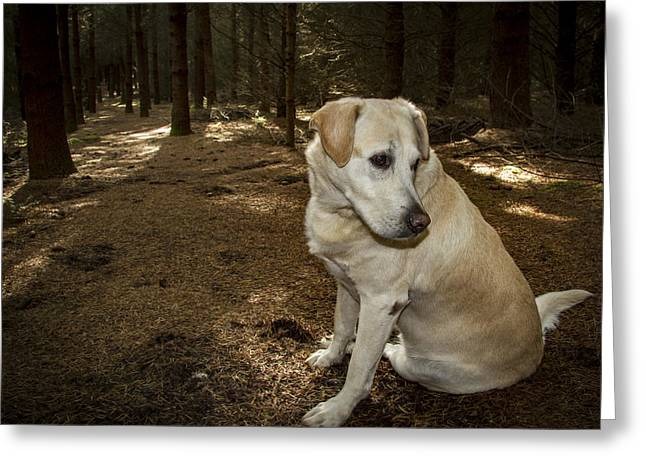 Pasha In The Woods Greeting Card by Jean Noren