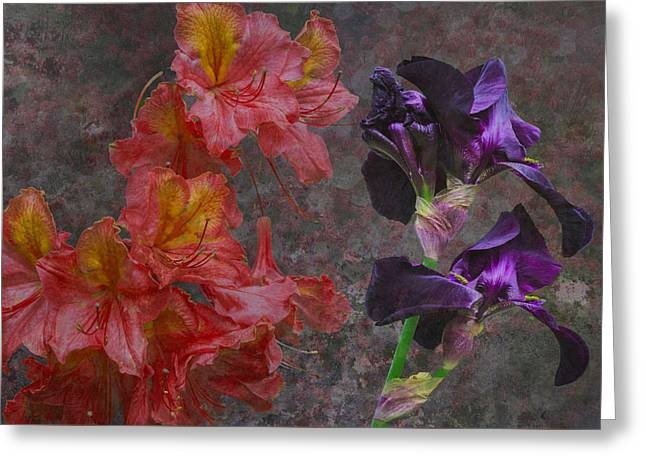 Paso Doble Greeting Card by Eric Ewing