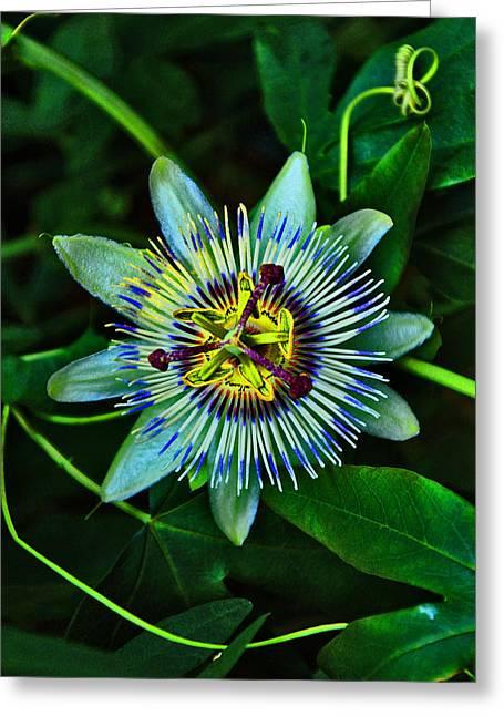 Passiflora Digital Art Greeting Cards - Passiflora.  Greeting Card by Andy Za