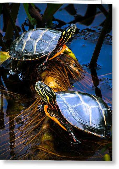 Animals Love Greeting Cards - Passing the day with a friend Greeting Card by Bob Orsillo