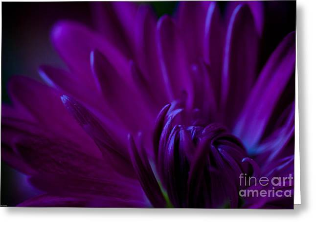 Best Flower Images Greeting Cards - Passion Greeting Card by Charles Dobbs