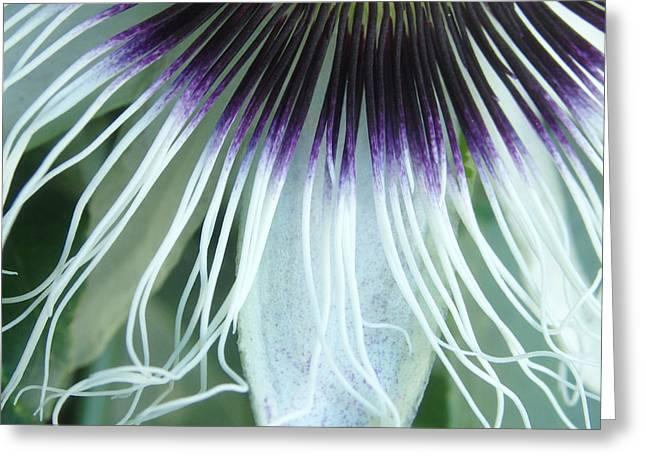 Passion Flower 3 - Passiflora Edulis Var. Flavicarpa Greeting Card by Elena Schaelike