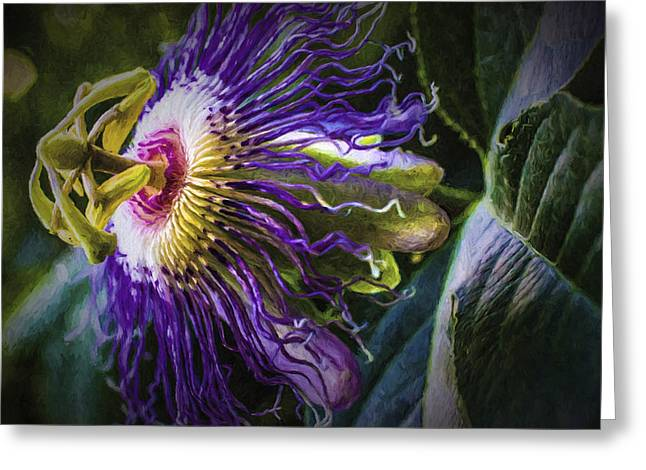 Passiflora Greeting Cards - Passion Flower Profile Greeting Card by Barry Jones