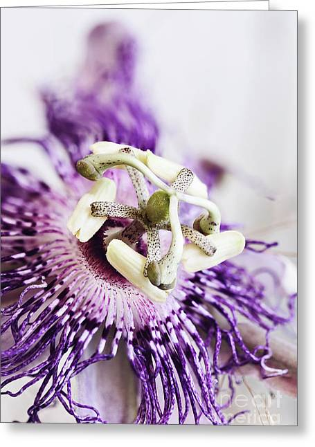 Passion Flower Greeting Card by Stephanie Frey
