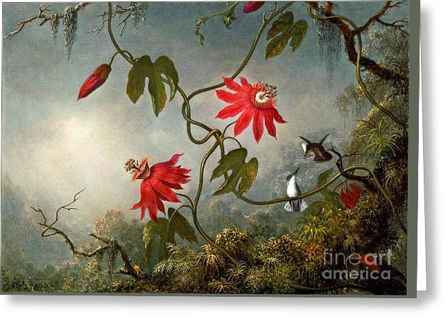 Passion Flowers And Hummingbirds 1870 Greeting Card by Padre Art