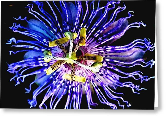 Passionflower Greeting Cards - Passion Greeting Card by Jeanie  Pendergrass