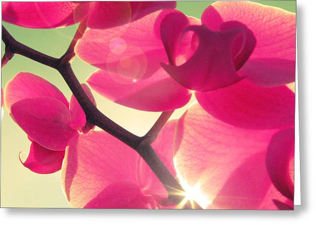 Orchids Greeting Cards - Passionato Greeting Card by Amy Tyler