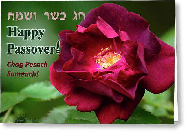 Passover Rose Greeting Card by Brian Tada