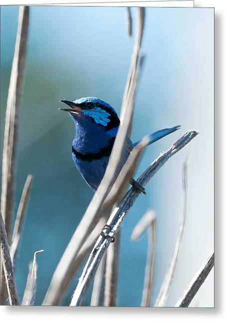 Wren Greeting Cards - Pastel Blue Greeting Card by Heather Thorning