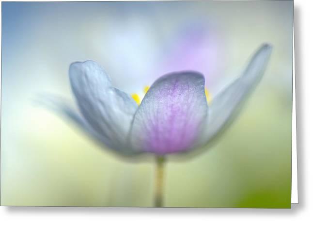 Anemones Greeting Cards - Pastel Flower Greeting Card by Gerard Leeuw