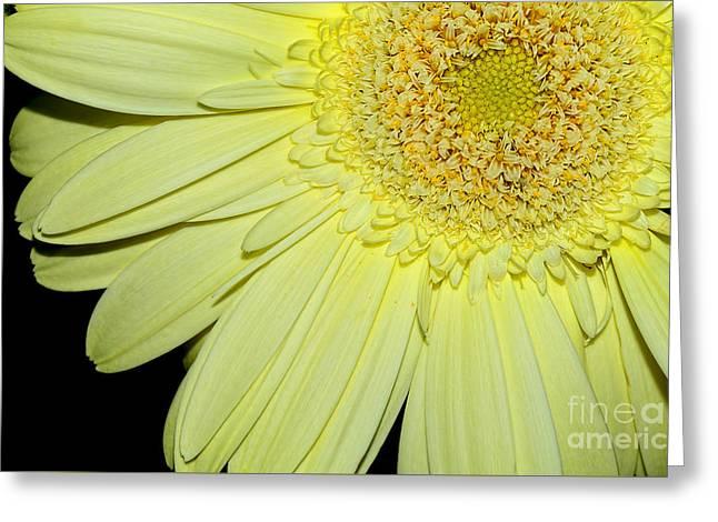 Pastel Lemon Gerbera By Kaye Menner Greeting Card by Kaye Menner
