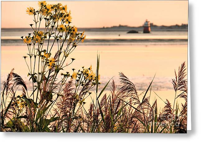 New England Ocean Greeting Cards - Pastel Morning Greeting Card by Janice Drew