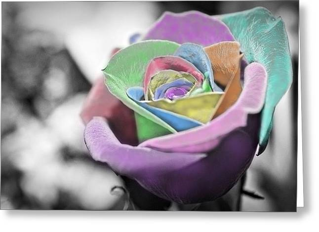 Pinks And Purple Petals Greeting Cards - Pastel Petals Greeting Card by Marla Johnson