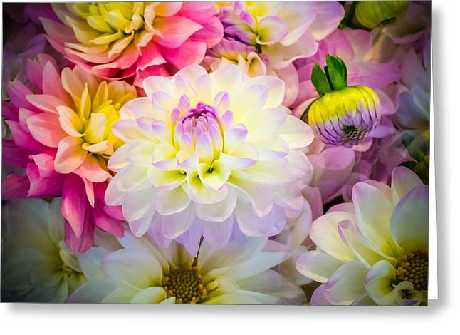 Flower Arraignment Greeting Cards - Pastel Purple Dahlia II Greeting Card by William Doree