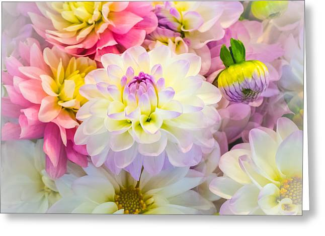 Flower Arraignment Greeting Cards - Pastel Purple Dahlia Greeting Card by William Doree