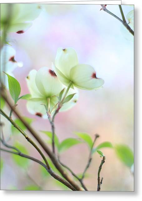 Indiana Dogwood Trees Greeting Cards - Pastel Spring Greeting Card by Andrea Kappler