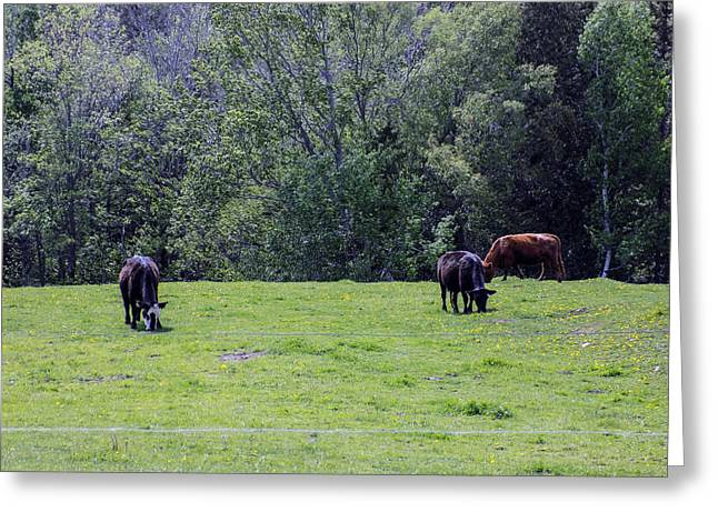 Maine Spring Greeting Cards - Pasture Meets Woods Greeting Card by William Tasker
