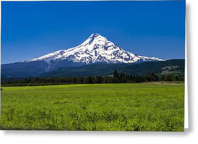 Pastureland Greeting Cards - Pasture View of Mt. Hood Greeting Card by John Trax