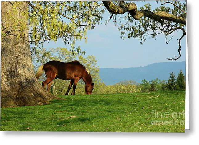 Hackney Greeting Cards - Pasture with a View Greeting Card by Thomas R Fletcher