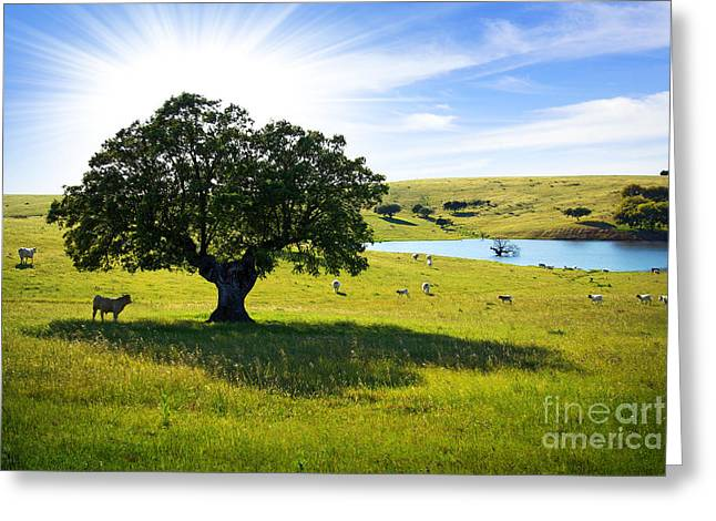 Rural Landscapes Photographs Greeting Cards - Pasturing cows Greeting Card by Carlos Caetano