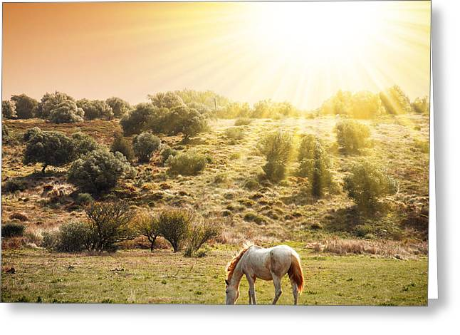 Beautiful Day Greeting Cards - Pasturing Horse Greeting Card by Carlos Caetano