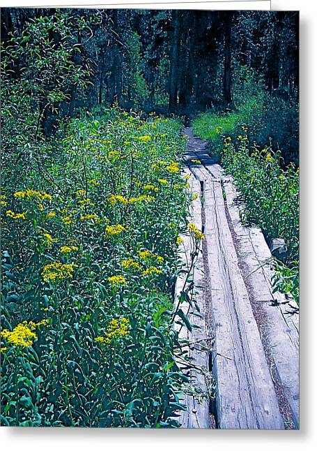 Pamela Cooper Photographs Greeting Cards - Path 4 Greeting Card by Pamela Cooper