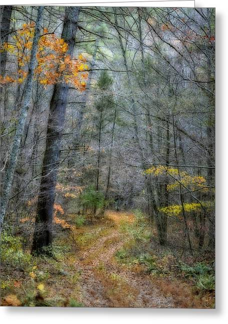 Kathy Jennings Photographs Greeting Cards - Path At Panther Falls Greeting Card by Kathy Jennings