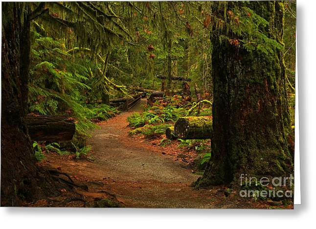 Path Between The Giants Greeting Card by Adam Jewell