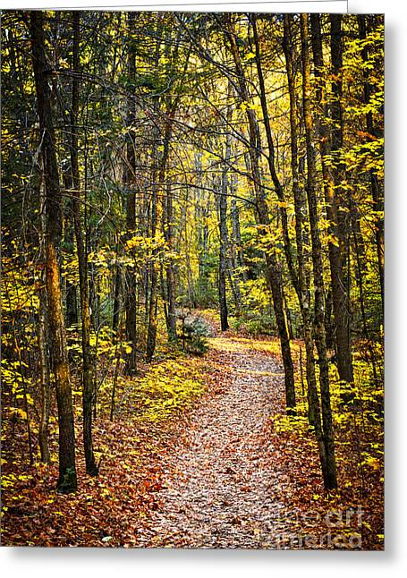Algonquin Park Greeting Cards - Path in fall forest Greeting Card by Elena Elisseeva