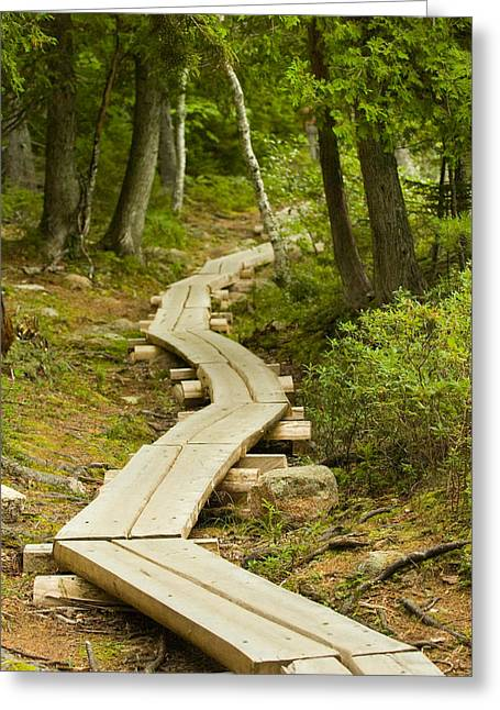 Acadia National Park Greeting Cards - Path Into Unknown Greeting Card by Sebastian Musial